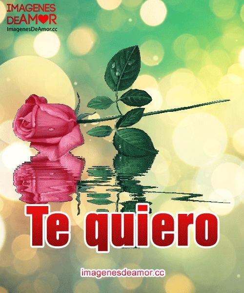 Rosa rosada sobre el agua y frase: Te quiero