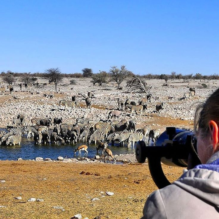 The waterhole at Okaukuejo camp. In winter, and sometimes even in summer, this waterhole has a constant flow of animals by day and night. Image from The Photographer's Guide to Etosha National Park eBook.  http://www.kruger-2-kalahari.com/photographers-guide-to-etosha.html