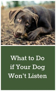What to Do if Your Dog Won't Listen