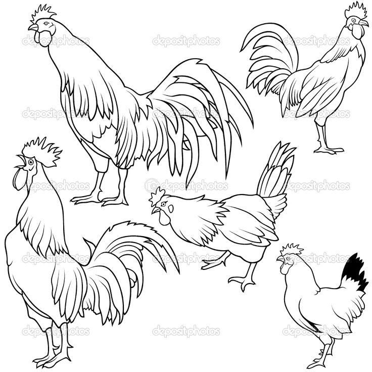 184 best Chicken Drawings images on Pinterest  Roosters Chicken