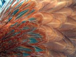 feathers - Google Search  trend feathers - colour combo