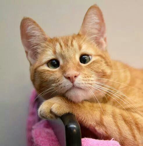 Главный секрет творчества в том, чтобы относиться к своим идеям как к кошкам — просто заставьте их следовать за вами.