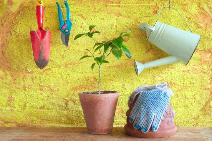 25 best ideas about zitronenbaum on pinterest. Black Bedroom Furniture Sets. Home Design Ideas