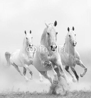 mata magnetyczna białe konie w pył