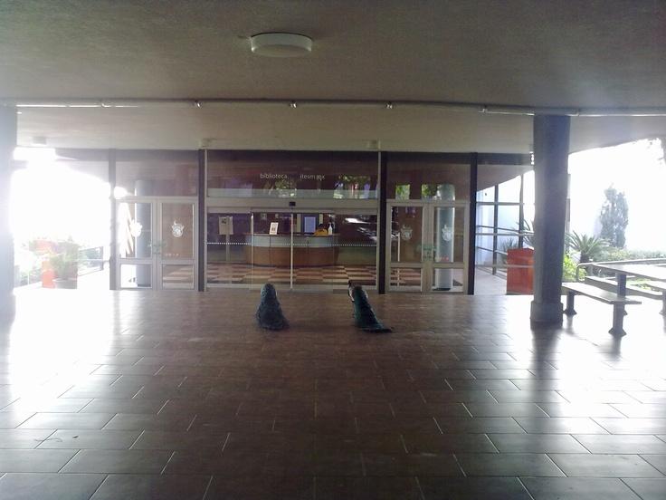 2012 05 Dos Pavo Reales Frente a Biblioteca ITESM