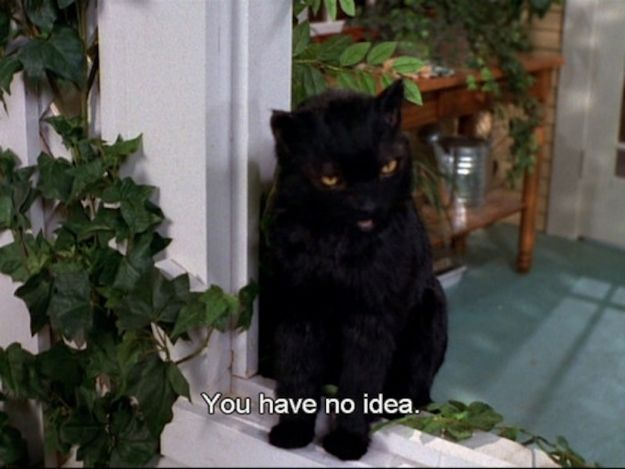 The 40 Greatest Things Ever Said By Salem The Cat - BuzzFeed