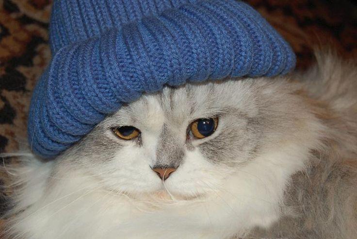 Algunas personas creen que por su pelaje, los gatos no sienten frío. Pero está demostrado, que tras una larga exposición al frío pueden sufrir de hipotermia e incluso, llegar a morir. Es por eso que no podemos pasar por alto, estas sencillas recomendaciones: