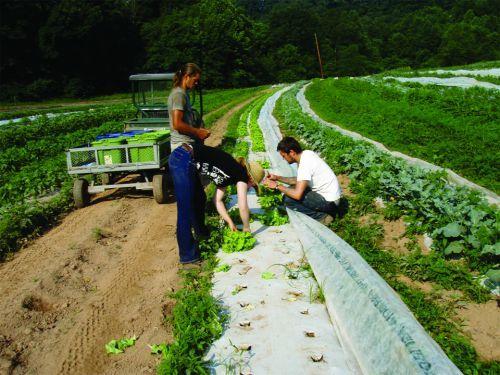Employment   Licking Creek Bend Farm