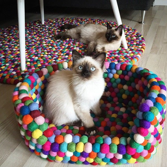 Mommy we love our new stuff from @nepaldo #nepaldo#120cm#nepaldokurv#kugletæppe#cats#birmakitten#siamese#kitten#instacat#catsofinstagram#multicolour#loveit