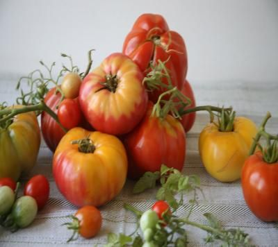 A terrific recipe for fresh tomato sauce