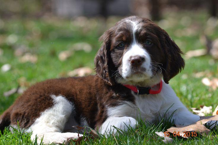 K Dog Training Cheshire