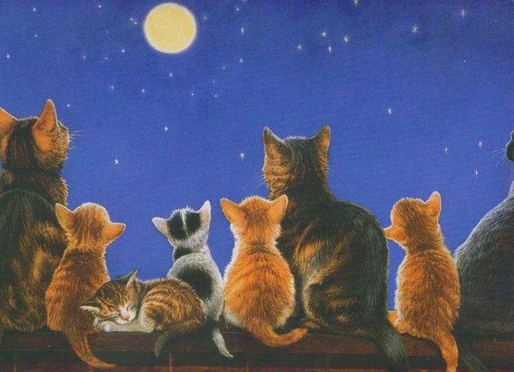 Cat at night painting. Chrissie Snelling