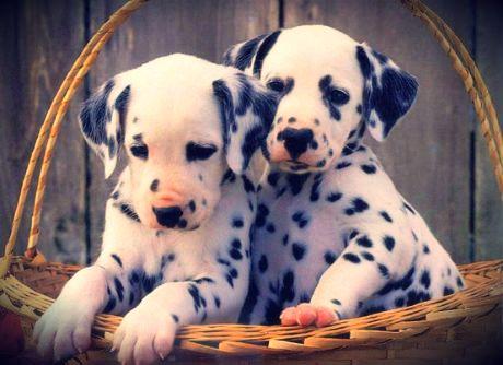 cachorros                                                                                                                                                      Más
