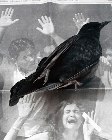 inneroptics:    dead bird -Geert Goiris