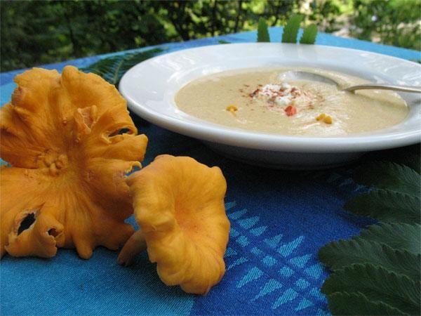Chanterelle Bisque with Herbed Yogurt Cheese Recipe | Wild Edible