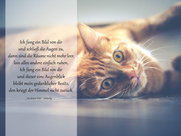 Ich fang ein Bild von Dir ... #Trauergedichte #ANUBIS #Tierbestattung