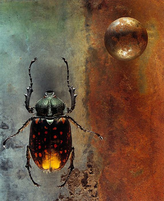 Jo Whaley – fine art photography of insects