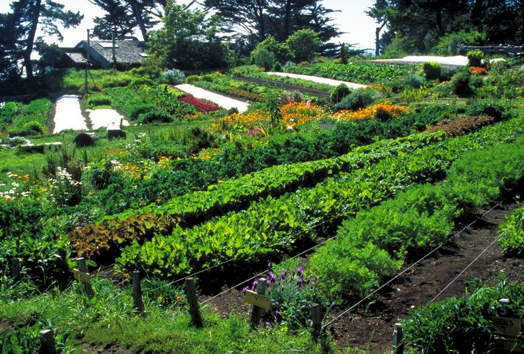 A lot of people are growing vegetables to beat the credit crunch. Growing vegetables is the best way to turn your gardening expertise into a means to save significant money. There are numbers of…
