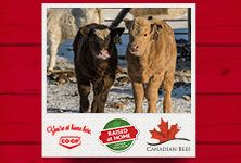 Your local Co-op is proud to support local ranchers. Meet three ranch families from Western Canada in Raised at Home, a three-part series from Co-op and Canada Beef. See how Co-op works with producers to bring quality Western Canadian beef to your table. www.raisedathome.ca/ - Manitoba