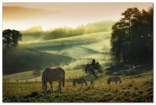 GermanyDefinition Wallpapers, Beautiful Photos, Hors Seasons, Nature, Horses, Animal Photography, Beautiful Fields, Hors Meadow, Hors Pasture