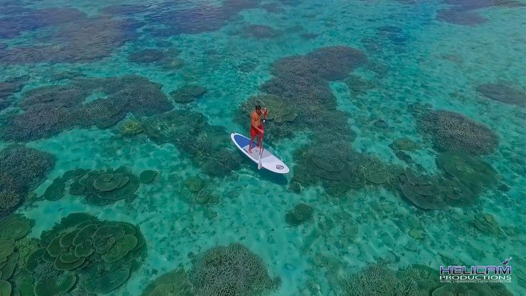 Paddle Boarder Above Coral