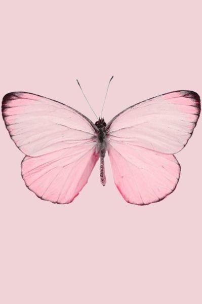 Butterfly Esperando a la primavera... #LagunaVillage