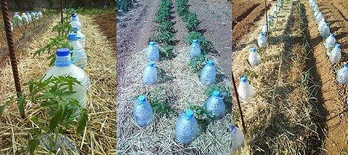 Irrigazione a Goccia Solare