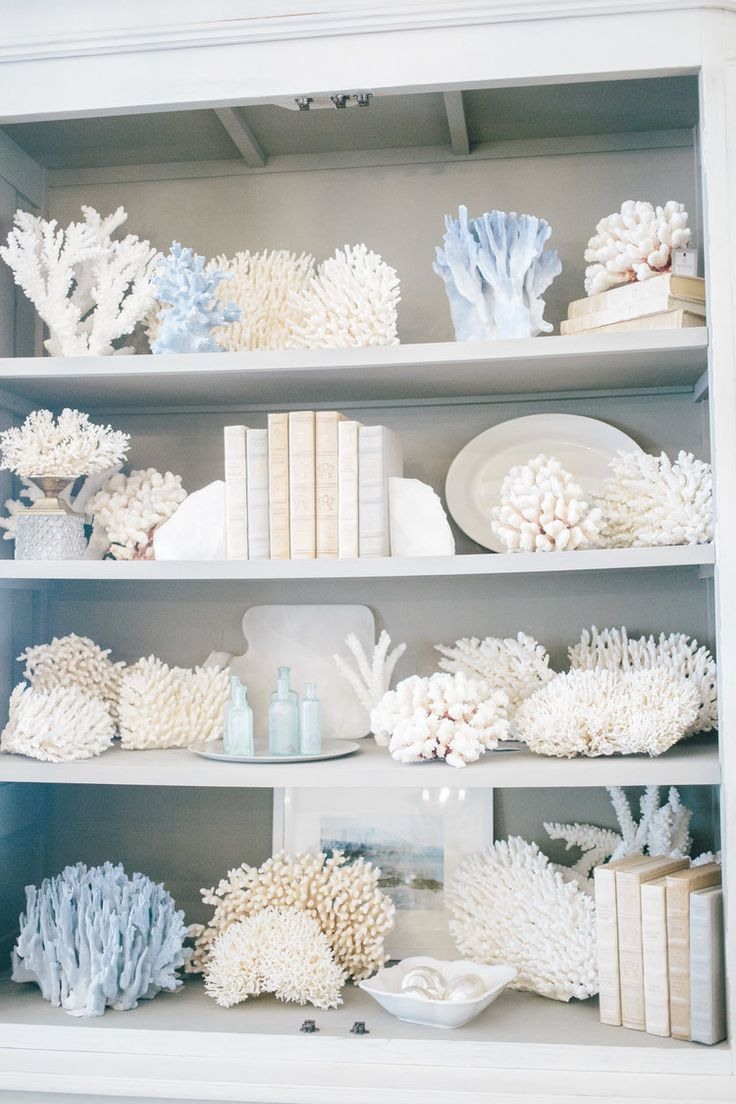 Decor nautical shell mirrors w sea glass starfish amp pearls blue - 180 Best Shells Coral Images On Pinterest Shells Seashells And Sea Shells