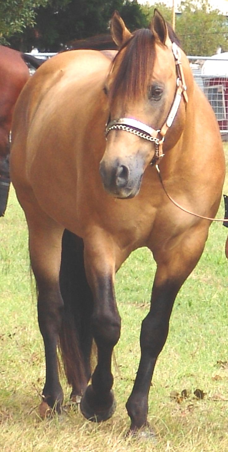 What is the importance of having Quarter Horses in Agriculture?