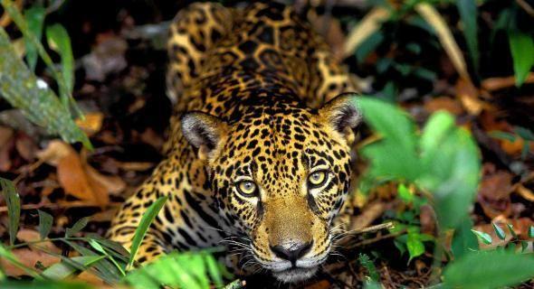 Resultados da Pesquisa de imagens do Google para http://4.bp.blogspot.com/-PZiONvl7-IQ/T5tg8K1ocfI/AAAAAAAAAvM/ZIxFDJJvKIs/s1600/fotografia_amazonia.jpg