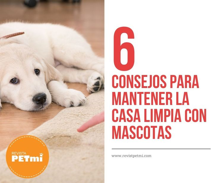 Para poder disfrutar de una casa limpia con mascotas es importante tomar en cuenta estos 6 consejos que te contamos a continuación Labrador Retriever, Dogs, Clean House, Cleaning Hacks, Parenting Hacks, Journals, Pets, Tips, Animales