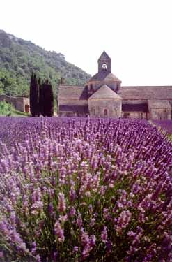 Lavender in Provence, France Walking down the road out in country here You can smell it in the air.