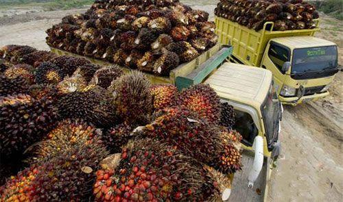 Anggota DPRD Kalimantan Timur Rakhmad Majid Gani mninta Pemprov Kaltim mengantisipasi penurunan harga sawit. Harga jual tandan buah segar (TBS) kelapa sawit pada Oktober alami penurunan hingga mencapai 1.469,45 per kilogram (Kg), ini merupakan yang terendah selama 2014. Imbasnya, petani mengaku mengalami kerugian yang tak sedikit. Penurunan harga TBS ini berlangsung berturut-turut berawal dari bulan Mei. Penurunan terbesar