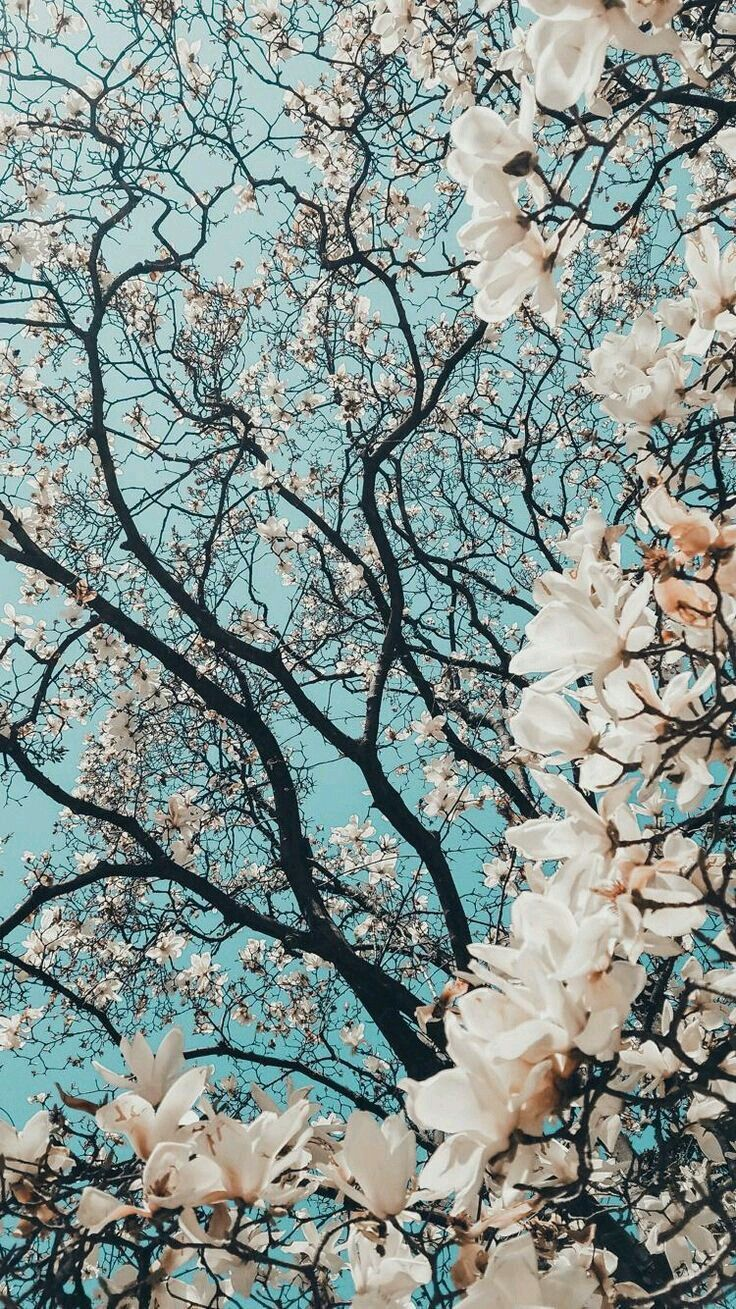 cherry blossoms love { flowers & florals } in 2019