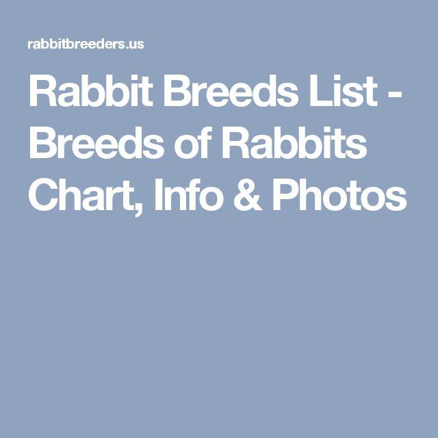 Rabbit Breeds List - Breeds of Rabbits Chart, Info & Photos