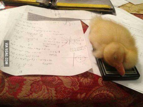 So I can't do my math homework cause my duck fell asleep on my calculator