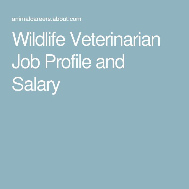 veterinary thesis topics ideas about veterinarian colleges veterinary wildlife veterinarian job profile and salary more