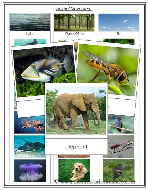 Free Animal Movement Cards - Swim, Walk, Fly from Montessori Print Shop