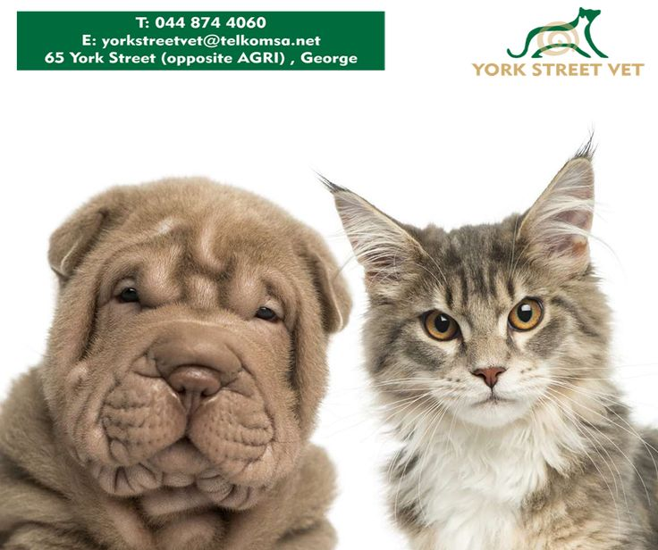 Protecting your pet by vaccinating it is an important step towards your pet living a long, healthy life. Contact us at 044 874 4060 to find out more about your pet's yearly vaccination. #YorkStreetVet #Vaccination #Petshttps://www.facebook.com/Yorkstreetvetshop/photos/pb.646016452164207.-2207520000.1439134251./810898439009340/?type=3