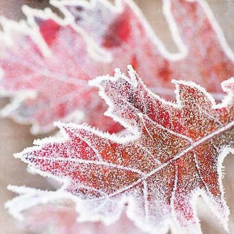 Image result for clouds of frosty breath etch silver haiku on leaves icy serenity
