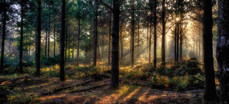 Rays of Africa  by SteveBailey