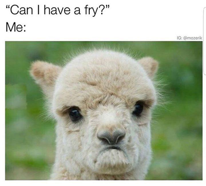 Animal Memes to Make You Laugh on Bad Days - 20