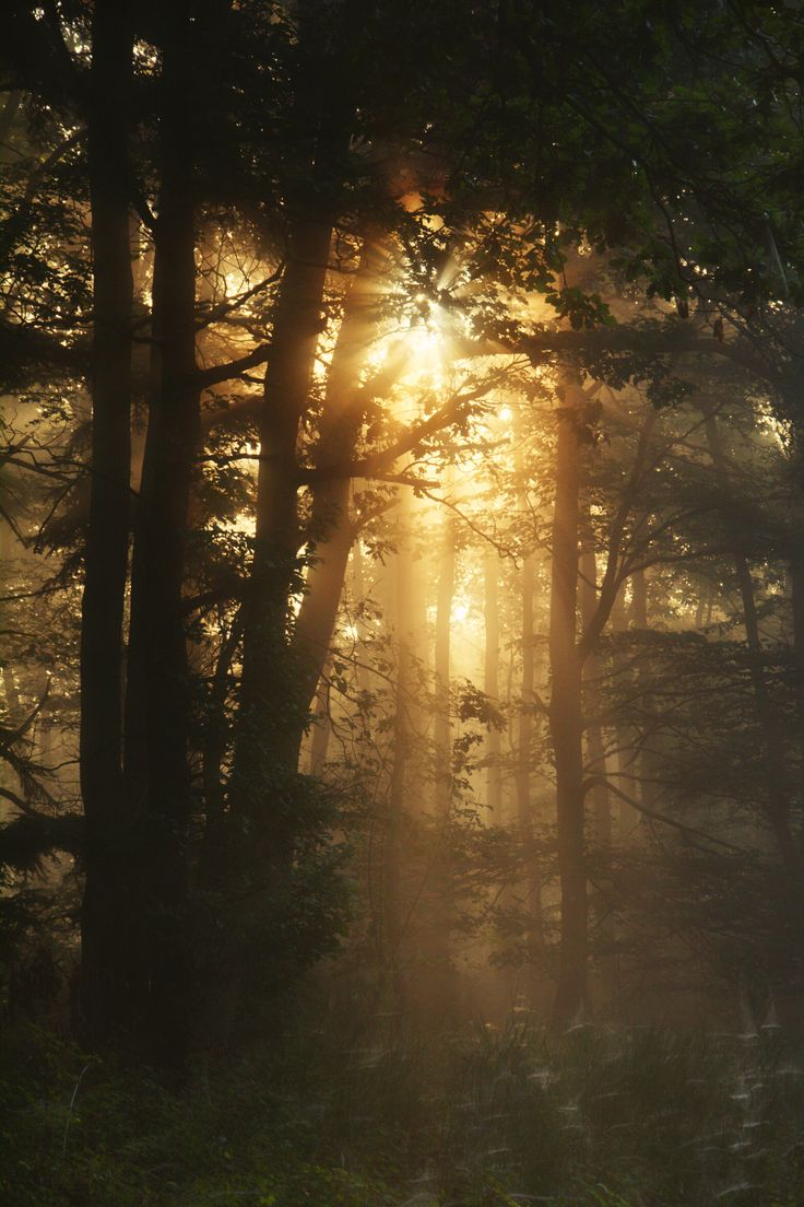 foggy forest in the morning sun