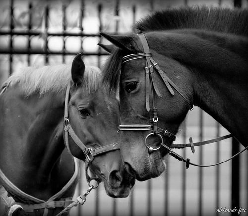 friendship. adorable.Beautiful Horses, Magnific Hors, Things Equine, Pets, Horses Nuzzling, Horses Lovers, Friendship, Magnificent Horses, Animal