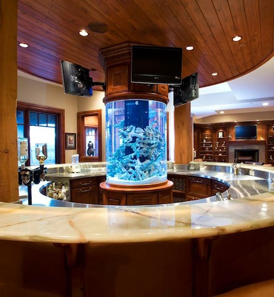 Top 25 best amazing fish tanks ideas on pinterest big for Fish tank bar