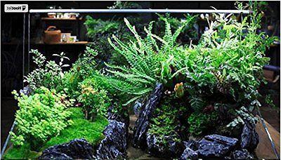 Glass Cages Aquarium