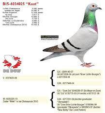 """Képtalálat a következőre: """"willy daniels pigeons 07"""""""