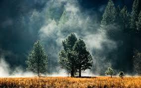 pacific northwest forest desktop - Google Search
