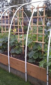 Raised bed garden with trellis and PVC pipes attached to outside