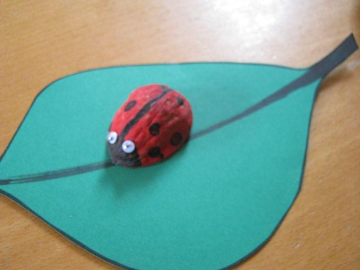 Lieveheersbeestje van een halve Walnoot! Leuk om te doen met kleintjes van 4 tot 6 jaar! Trots dat ze dan zijn!!